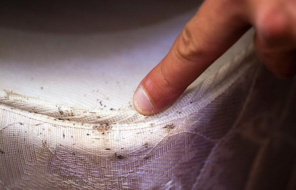Bed Bug Management Restoring Dignity Omaha