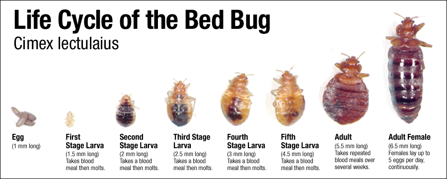 Bed bug management restoring dignity omaha for Life expectancy of mattress